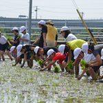 2016年5月24日 中有知小学校の児童が田植えを行いました