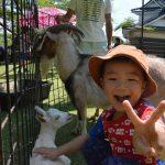 2016年6月18日 小倉公園でふれあい動物園が開かれました