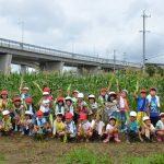 2016年6月28日 中有知小学校の児童がトウモロコシを収穫しました