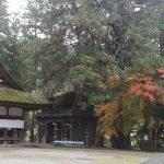 今朝の神社の紅葉状況です