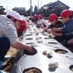2017年2月28日 中有知小学校児童がジャガイモの種イモを植えました