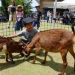 2017年6月10日 ふれあい動物園が開催されました