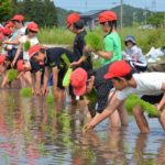 2017年5月29日 藍見小学校の児童が田植えを行いました