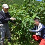 2017年9月3日 OKB社会貢献クラブが美濃和紙の原料コウゾの枝切り作業ボランティアを行いました