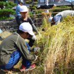 2017年9月5日 大矢田小学校児童が稲刈りを体験しました