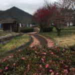 曽代(そだい)のみちくさ館では、八重咲きの紅梅が、開花していました☺️