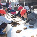 2018年3月13日 中有知小学校児童がジャガイモの種イモを植えました