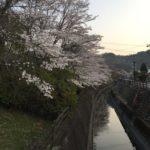 曽代の道の駅「にわか茶屋」付近の桜。