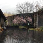 曽代にある「岐阜県立森林文化アカデミー」の桜。