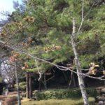 3月23日の小倉公園の桜。