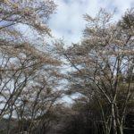 大矢田(おやだ)から御手洗(みたらい)に向かった道の、大矢田トンネルを抜けた辺り。