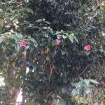 本日の小倉公園は人が居なくて、鳥の鳴き声があちこちで聞こえていました☺️
