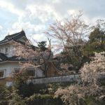 [4月3日(火) 小倉公園さくら開花状況 散り始め]