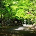 [GWおでかけ情報!大矢田神社の新緑&御朱印]