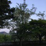 〈美濃市のナンジャモンジャ②小倉公園〉