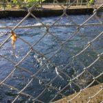 井の面水力発電所関連施設。