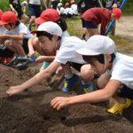 2018年6月5日 牧谷小学校でトロロアオイの種まきが行われました