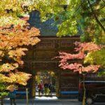 2018年11月23日 大矢田神社のモミジが見ごろを迎えています