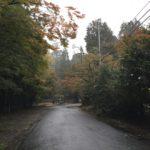11月6日の大矢田神社紅葉状況。