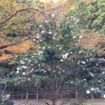 大矢田神社は、サザンカも綺麗です☺️