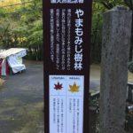 大矢田神社にて。