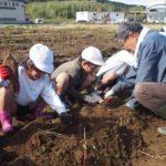 2018年11月13日 美濃小学校児童が芋掘り体験をしました