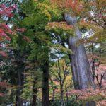 大矢田神社って、病気平癒の御利益が、全国ランキング上位だそうです。