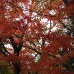 紅色が鮮やかな紅葉☺️