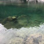 長良川で川鯉を見つけました☺️
