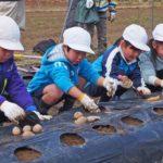 2019年2月21日 中有知小学校児童がジャガイモの種イモを植えました