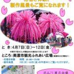 """Notice of the Mino Festival """"Hana Mikoshi"""" special display."""