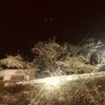 桜の開花状況です🌸