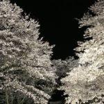 安毛の永昌院さんでは、桜ライトアップ中です☺️