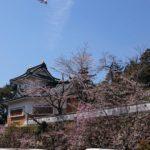 桜の開花状況です🌸 もうすぐ八分咲き (H31.4.5 小倉公園 )