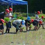 2019年5月8日 大矢田小学校児童が田植えをしました
