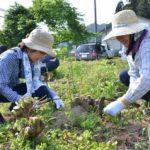 2019年5月5日 ボランティアによるコウゾの栽培が始まりました