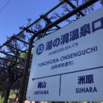 長良川鉄道湯の洞温泉口駅の藤の花、綺麗ですよ☺️