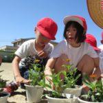 2019年5月23日 藍見小学校児童が花植えを行いました