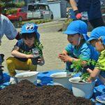 2019年5月10日 美濃ふたば幼稚園で苗植えが行われました