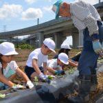 2019年6月11日 「やきいも部会」が美濃小学校児童とさつまいもの苗植えを行いました